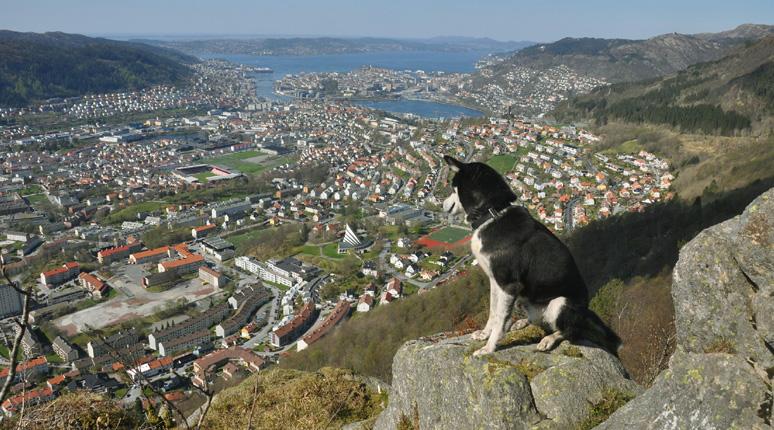 Turbok over Bergenshalvøyen