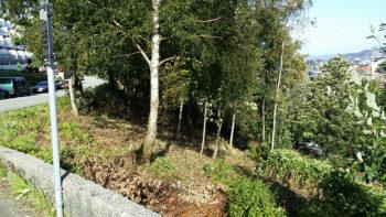 Trær og kratt er fjernet i Solheimslien og Strandlien