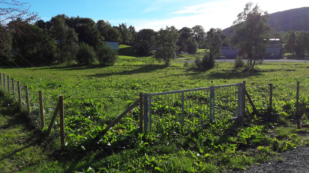 Flytter parsellhagen fra Fløen til Storetveitmarken, tilbake senest i 2023